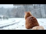 «Ето наше Племя» под музыку Коты-воители - Остролистая - Снег в душе. Picrolla